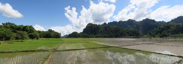 Panorama sur les rizières et les collines de Hpa-An