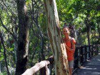Elise sur le chemin du parc de Noosa