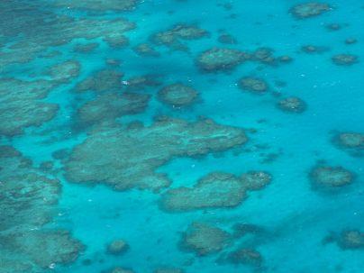 Détail des récifs de la Grande Barrière de Corail