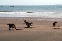 A 5h du matin, les Kangourous sont de sortie !