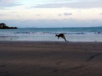 """Un Kangourou en pleine """"course"""""""