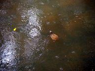 On a vu des tortues