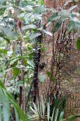 Dans la forêt des gorges de Finch Hatton