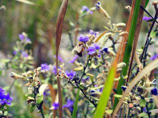 Fleurs au parc Girraween
