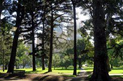 Les buildings derrières les arbres des parcs :)