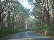 Diversité de paysages sur la Great Ocean Road