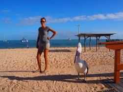 Les pélicans nous accueillent sur la plage de Monkey Mia