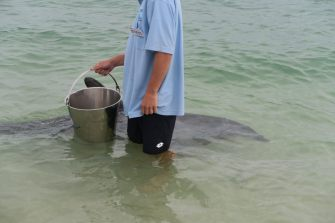 Un volontaire et son seau pour nourrir un dauphin