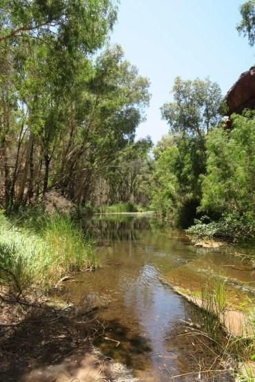 """Dans Dales Gorge, on longe une petite rivière tranquille à l'ombre des """"gum trees"""""""