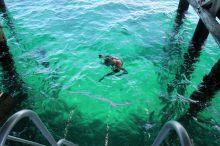Julien prêt à partir à l'exploration des coraux sous la jetée
