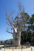 Dans les jardins botaniques à Perth