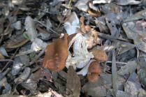Un champignon rencontré en route