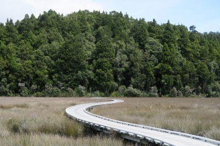 Sur le chemin de la randonnée à Okarito