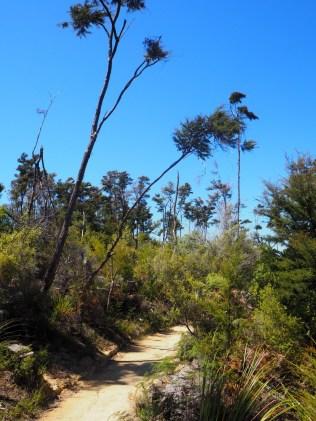 Le chemin de randonnée au Parc national d'Abel Tasman