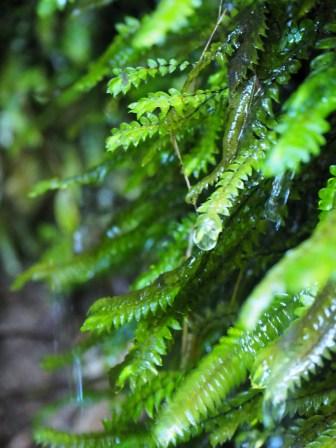 Randonnée au Parc national d'Abel Tasman