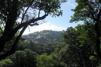 Sur les hauteurs de Wellington, les beaux quartiers