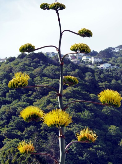 Le jardin botanique de Wellington