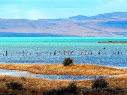 """Au bord du lac """"Argentine"""" (Lago Argentino), une réserve écologique municipale avec e nombreux oiseaux"""