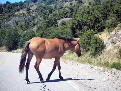 Un cheval sur la route...