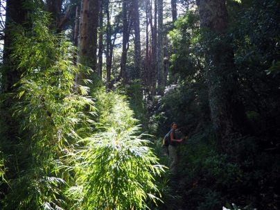 Elise dans la forêt lors de la rando sur le Cerro San Sebastian