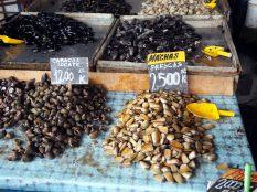 A la criée de Valparaiso, divers coquillages et fruits de mer en vente