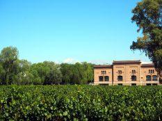 Vignobles à Maipu, avec la Cordilière de Andes dans le fond