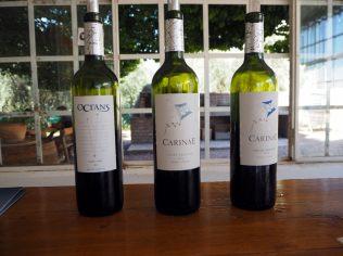 Dégustation de vins de Carinea, Mendoza
