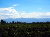Vignobles, Mendoza