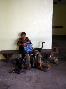 Une touriste assiegée de coatis... Elle ne va pas finir son déj !