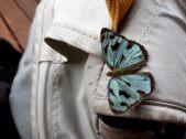 Papillion, chutes d'Iguazu