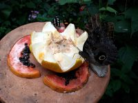 """Dans la """"volière"""" des papillons"""