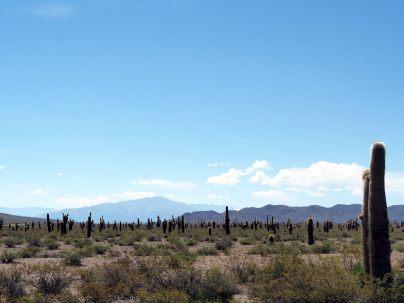 Cachi Pampa dans le parc national Los Cordones, des catus à perte de vue...