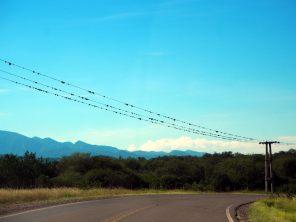 Sur la route entre Cafayate et Salta, les fil éléctrique sont attaqués par la végétation !