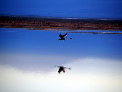 Laguna Chaxa de la Reserva de los flamencos, au lever du soleil
