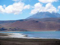 Lagunas Miscanti-Miniques ne sont pas accessibles de près afin de favoriser la reproduction des animaux