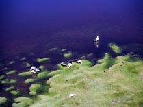 Laguna Negra, Sud Lipez