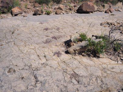Traces fossilisées de dinosaure au parc de Toro Toro
