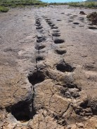 A la découverte des traces fossilisées de dinosaures au parc de Toro Toro