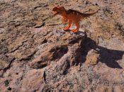 Trace fossilisée de dinosaure au parc de Toro Toro