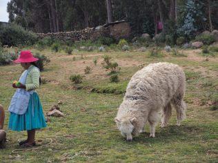 De jeunes filles se promènent avec un Lama pour se faire prendre en photo