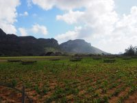 Vue sur les champs de tabac, Vinales