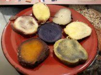 Différentes races de pommes de terre du Pérou