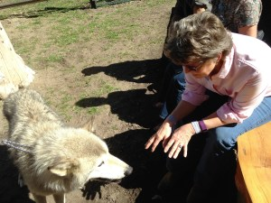 "The camp Program Director, Josh Rasmussen, arranged a visit with the folks and the wolves from ""Wolf Education Project. It was pretty interesting to be up close with the beautiful pair."
