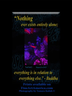 """Nothing ever exists entirely alone; everything is in relation to everything else."" - Buddha. One of the quotes which is included in the book ""On Becoming a Lemonade Maker"" by Tamara Kulish. Mankind used to think of so many things as being so separate from everything else, and the more we learn, the more we see that these age-old words are more true than we ever realized."