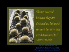 """""""Some succeed because they are destined to, but most succeed because they are determined to."""" – Henry Van Dyke. One of the quotes which is included in the book """"On Becoming a Lemonade Maker"""" by Tamara Kulish."""