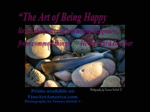 """The Art of Being Happy lies in the power of extracting happiness from common things."""" – Henry Ward Beecher. One of the quotes which is included in the book """"On Becoming a Lemonade Maker"""" by Tamara Kulish."""