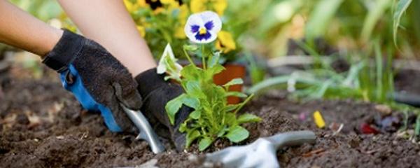 Flowerbed Maintanence