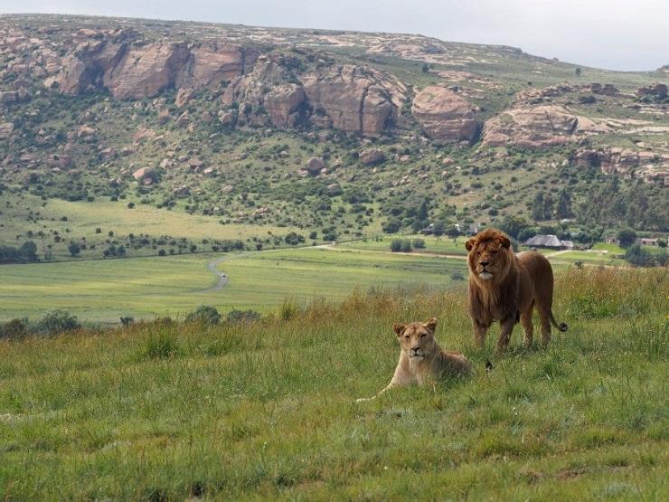 lions_rock