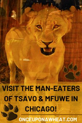 Lions of Tsavo Pin