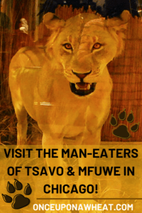 Lions of Tsavo Pin